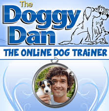 Doggy dan reviews